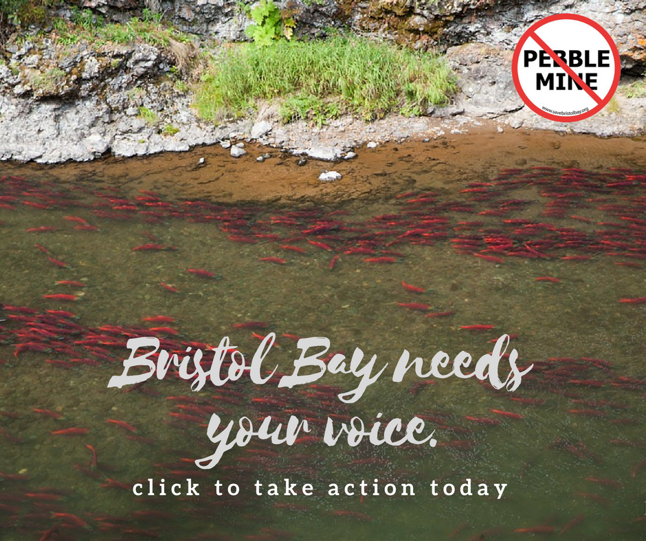 Bristol Bay Needs Our Voices