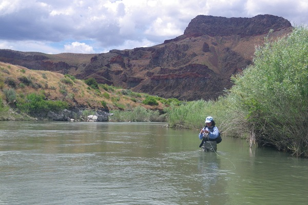 Fly fishers international fly fishing fair august 7 11 for Owyhee river fly fishing